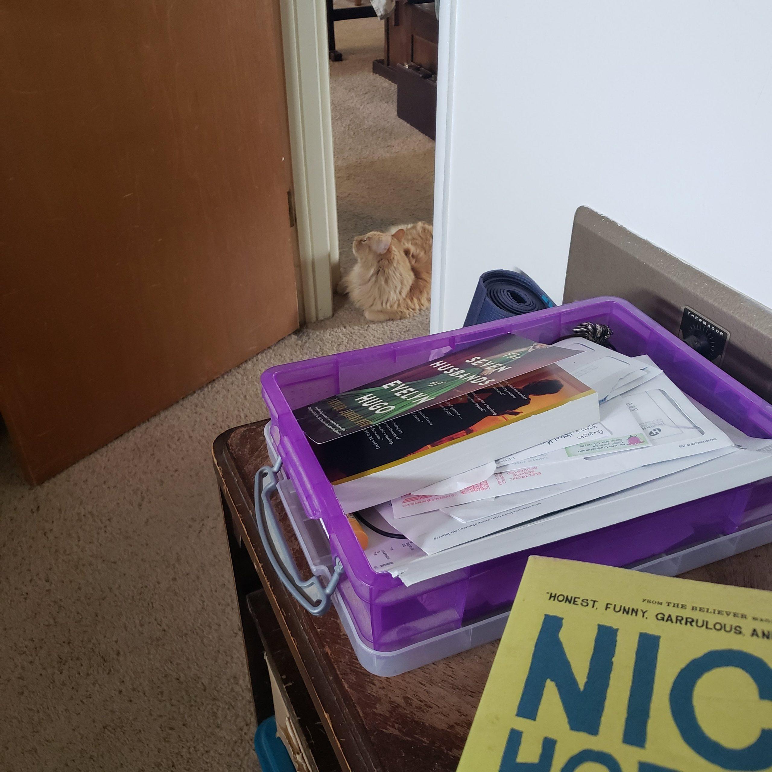 cat, books,